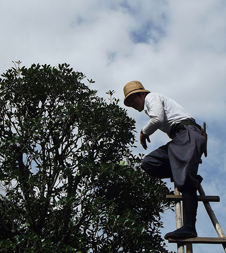 Tree Trimming Service Deltona FL